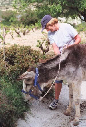 Donkeys are sweet natured and hard working