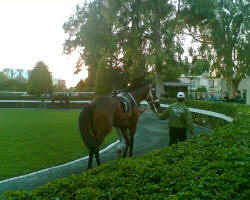 The Nicosia Racecourse is a lovely place to spend a day in Cyprus - the paddocks