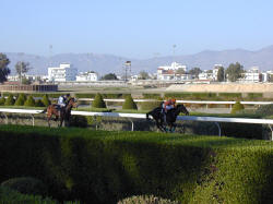 Organised racing in Cyprus has a longer history than is generally known. It is said that it started in 1878. At that time some government departments such as the police, used horses extensively in their day- to- day duties. It was natural therefore, that they should wish to organise competitions amongst themselves, and that is how organised racing started in Cyprus.